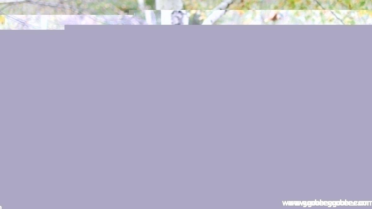 1f2c81bfb3c50a5043af6daec859411c_1508044519_06.jpg
