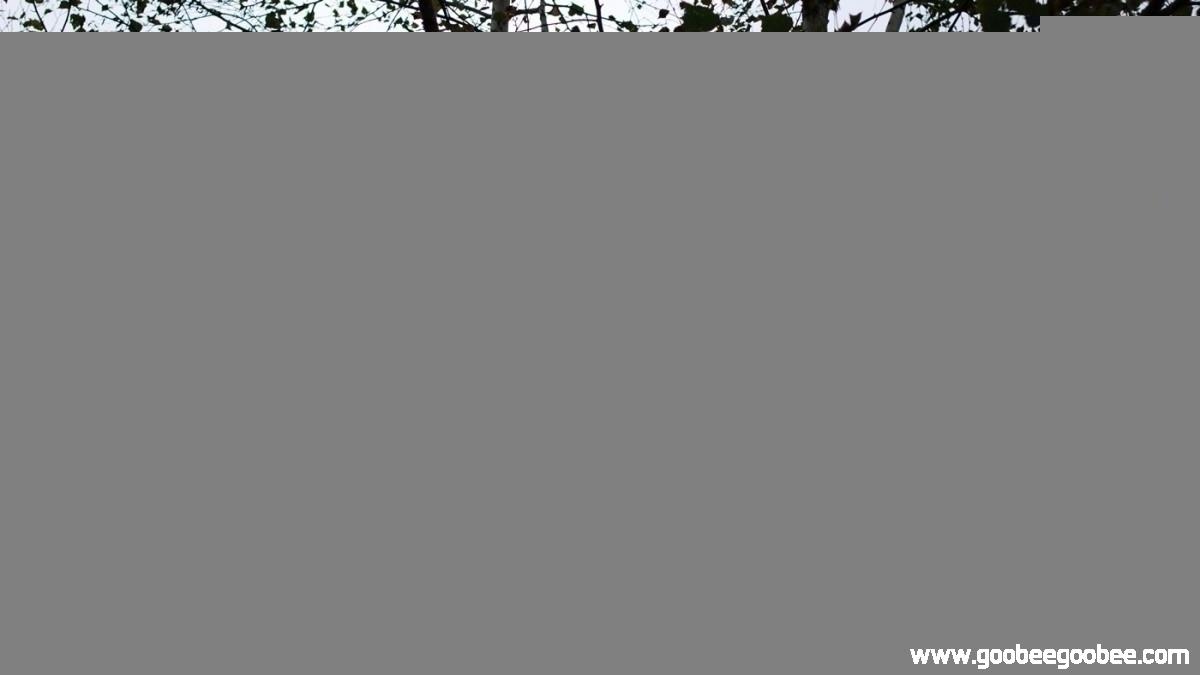 1f2c81bfb3c50a5043af6daec859411c_1508044684_7182.jpg