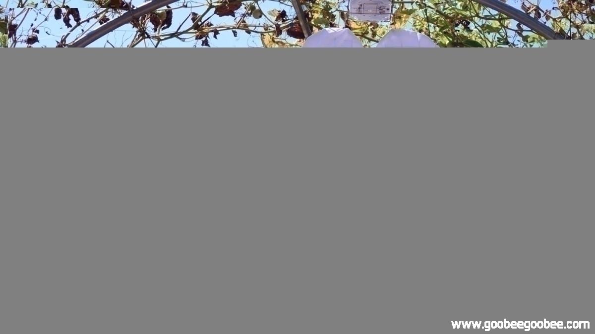 4b5305ba487ce7f43a096a052e4a5f3d_1508238122_0203.jpg